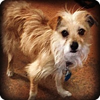 Adopt A Pet :: Sandy - Tijeras, NM