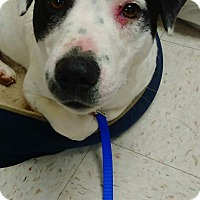 Adopt A Pet :: Nelly - Kendall, NY