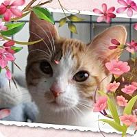 Adopt A Pet :: Karaka - Cincinnati, OH