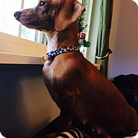 Adopt A Pet :: Zoe - Spring Valley, NY
