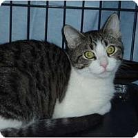 Adopt A Pet :: Cloud - Westfield, MA