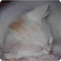 Adopt A Pet :: Hercules - Washington Terrace, UT