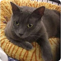 Adopt A Pet :: Annalise - Chesapeake, VA