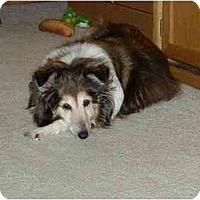 Adopt A Pet :: Fiona - Indiana, IN