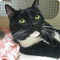 Adopt A Pet :: KATIE - Brea, CA