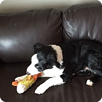 Adopt A Pet :: Jester - Midwest (WI, IL, MN), WI