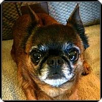 Adopt A Pet :: BRUE LYNN - ADOPTION PENDING - Seymour, MO