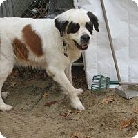 Adopt A Pet :: STORMY - Sudbury, MA
