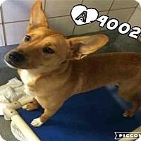 Adopt A Pet :: ZINNY - San Antonio, TX