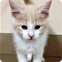 Adopt A Pet :: ADOPTED!!!   Gabe - Oswego, IL