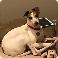 Adopt A Pet :: Ziggy AKA Terry - Westbury, NY