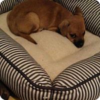 Adopt A Pet :: ALVIN - Tonawanda, NY