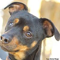 Adopt A Pet :: McFly - Homewood, AL