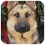 Photo 1 - German Shepherd Dog Dog for adoption in Los Angeles, California - Monty von Montoya