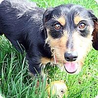 Adopt A Pet :: Diezel - Toronto, ON