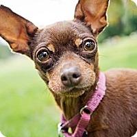 Adopt A Pet :: Waffles - Santa Monica, CA