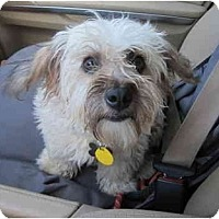 Adopt A Pet :: oliver twist - houston, TX