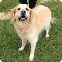 Adopt A Pet :: Jake II - New Canaan, CT