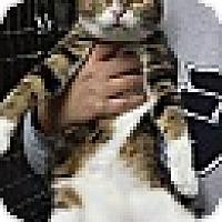 Adopt A Pet :: Kate Hudson - Richboro, PA