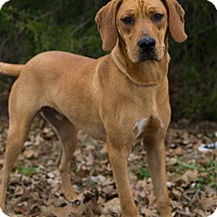 Adopt A Pet :: *Hunter - PENDING - Westport, CT