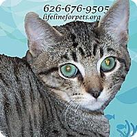 Adopt A Pet :: REX - Rad! - Monrovia, CA