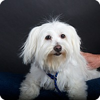 Adopt A Pet :: Sparkle - Nuevo, CA