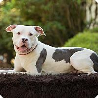 Adopt A Pet :: Ryder - Salem, OR