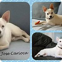 Adopt A Pet :: Jose Carioca - DOVER, OH