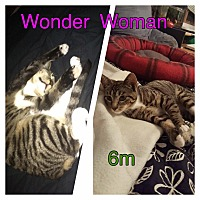 Adopt A Pet :: Wonder Woman - Brentwood, NY
