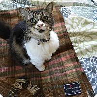 Adopt A Pet :: Madison - Pasadena, CA