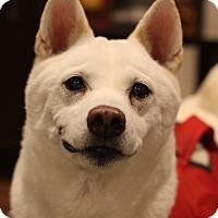 Adopt A Pet :: Kiyoshi - Manassas, VA