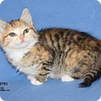 Adopt A Pet :: *DEBBIE* - Hanford, CA