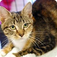 Adopt A Pet :: Coralee - DFW Metroplex, TX