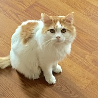 Adopt A Pet :: Amarillo - Greensburg, PA