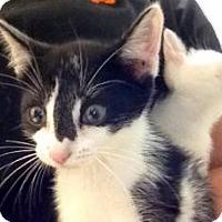 Adopt A Pet :: Ivy - Winter Haven, FL