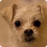 Adopt A Pet :: Stella the Beautiful! - Haverhill, MA