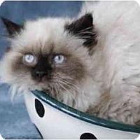 Adopt A Pet :: Mocha - Columbus, OH