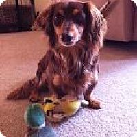 Adopt A Pet :: Mickie - Atascadero, CA