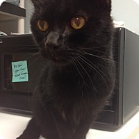 Adopt A Pet :: Hank - Byron Center, MI
