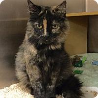 Adopt A Pet :: Coco - Colmar, PA