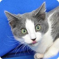 Adopt A Pet :: Hera - Pagosa Springs, CO