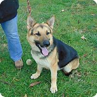 Adopt A Pet :: Viking - Greeneville, TN