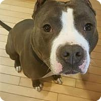 Adopt A Pet :: Romeo - Crown Point, IN