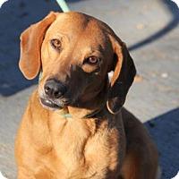 Adopt A Pet :: Liberty - tampa, FL