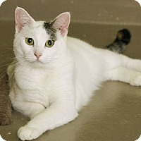 Adopt A Pet :: Smudge - Verona, WI