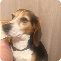 Adopt A Pet :: Susy Q - Lancaster, KY