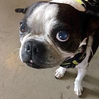 Adopt A Pet :: McTavish - Sanger, TX