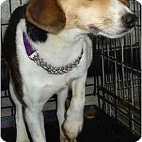 Adopt A Pet :: Coco - Toronto/Etobicoke/GTA, ON