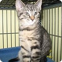 Adopt A Pet :: Clarissa - Shelton, WA