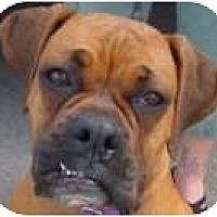 Adopt A Pet :: Sweetie - Sunderland, MA